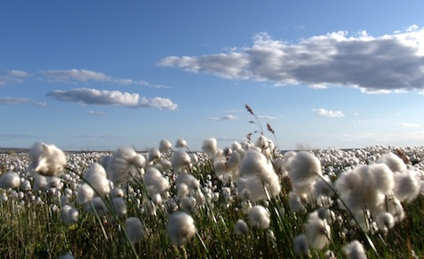 Cotton Prices Rise in March