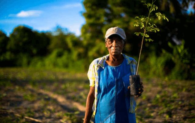 Haiti Smallholder Farmers Alliance
