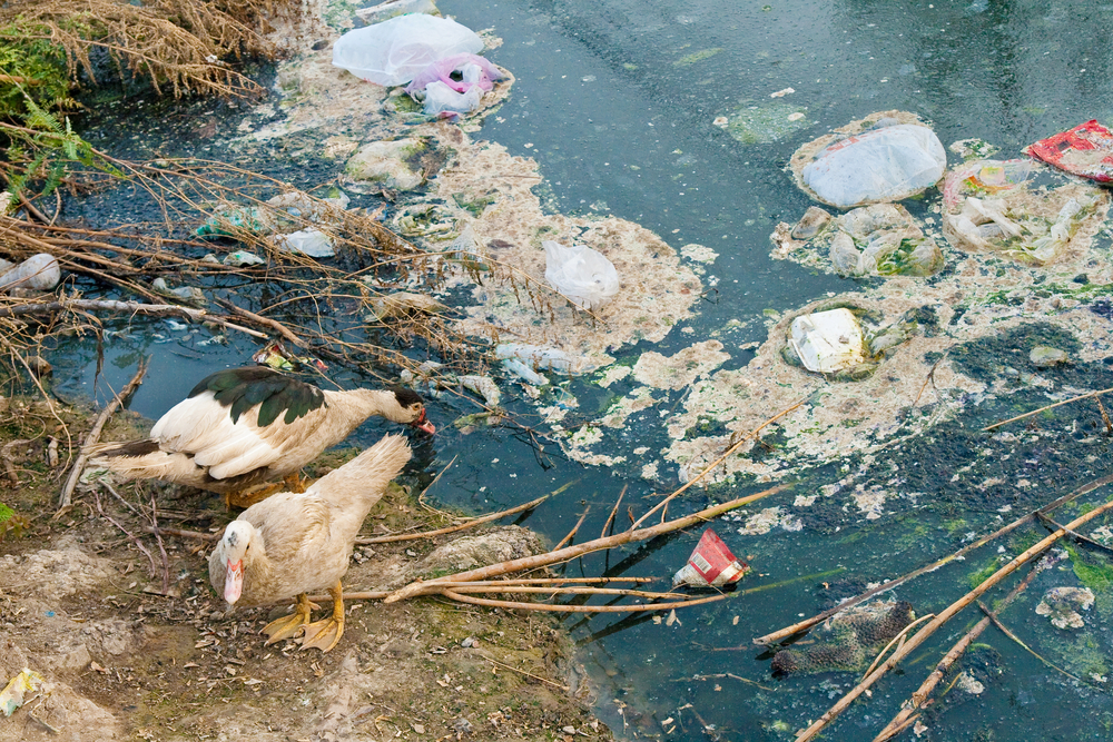 Image of pollution from wastewater