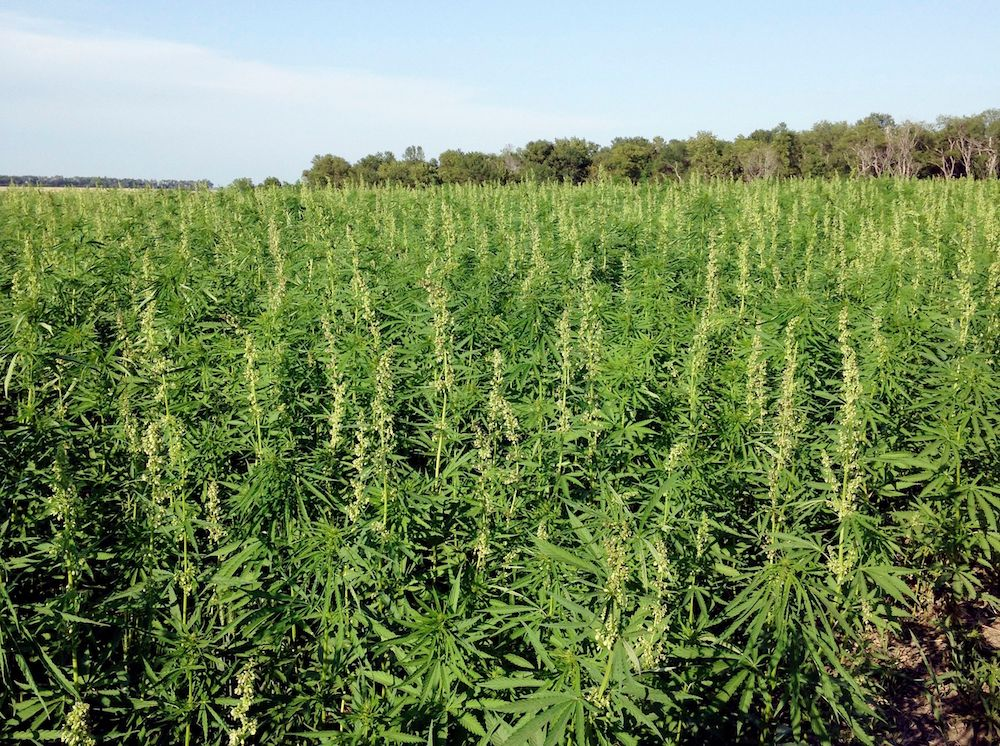 Hemp Growers