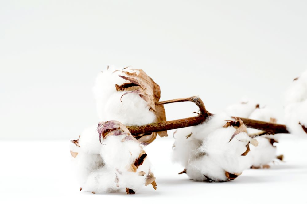A California cotton grower ordered $1 million of Applied DNA Science's SigNature T taggant for the 2019-20 ginning season.