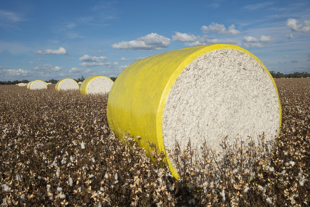 The Better Cotton Initiative said this week that in the first half of 2019 it welcomed 200 new members across its membership categories.