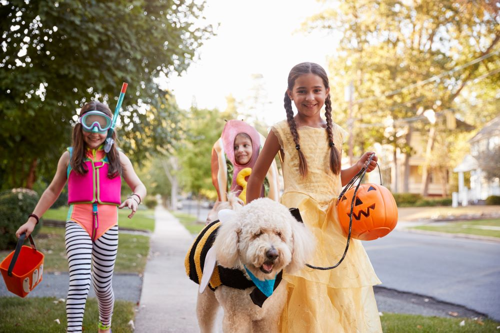 Halloween enthusiasts refuse to have their whimsical impulses dashed by the threat of recession.