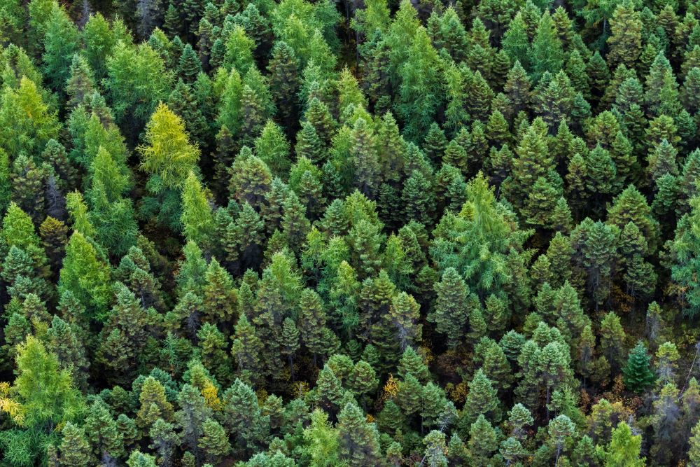 """In Davos, forestry nonprofit Canopy announced a """"bold"""" but tangible strategy to save 30 percent or more of the world's forests by 2030."""