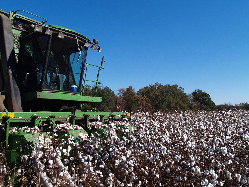 The signed U.S.-China Phase One trade deal might ease tariff tensions, but it could also mean higher cotton prices, Cotton Inc. said.