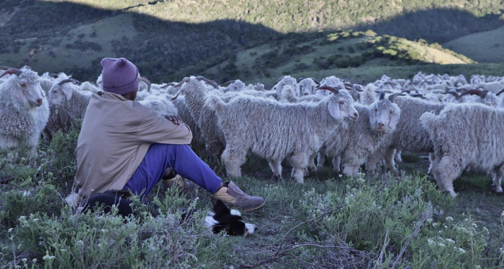 Textile Exchange has releases a new Responsible Mohair Standard and has made its first revision to the Responsible Wool Standard.
