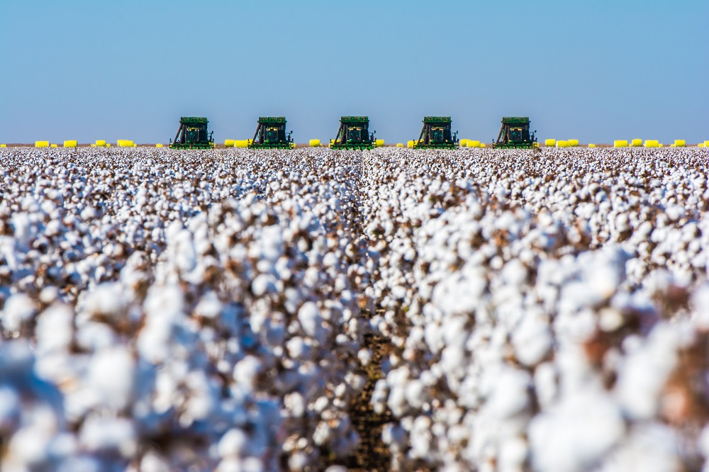 Depressed cotton prices could go even lower if demand bottoms out from coronavirus disruptions and the U.S.-China trade dispute flares up.