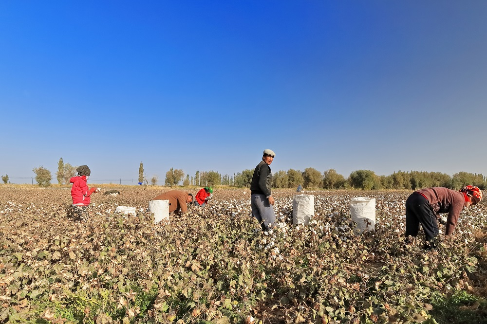 Responding to alleged forced labor in cotton farming in Western China, BCI has actively engaged in dialogue on its Decent Work principle.