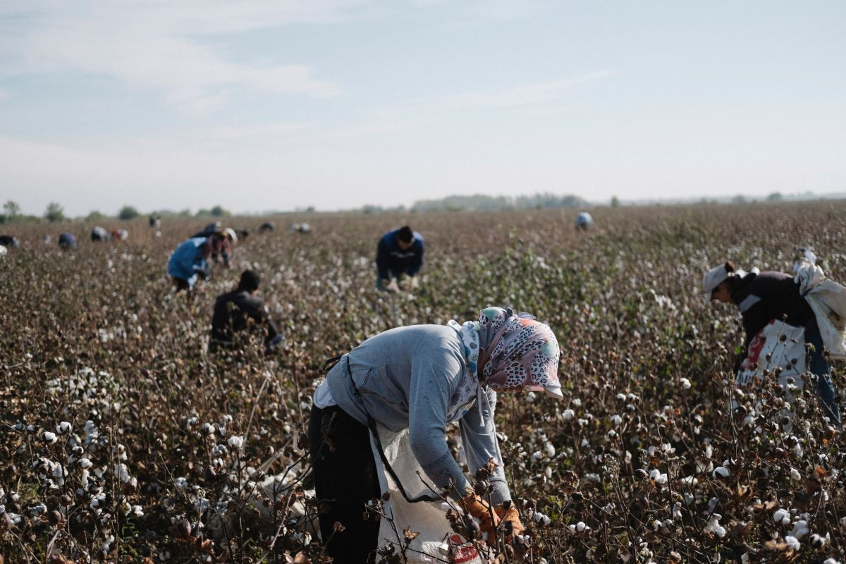 U.S. fashion brands need specific assurances from Uzbekistan before they can source cotton from a country with a history of forced labor.