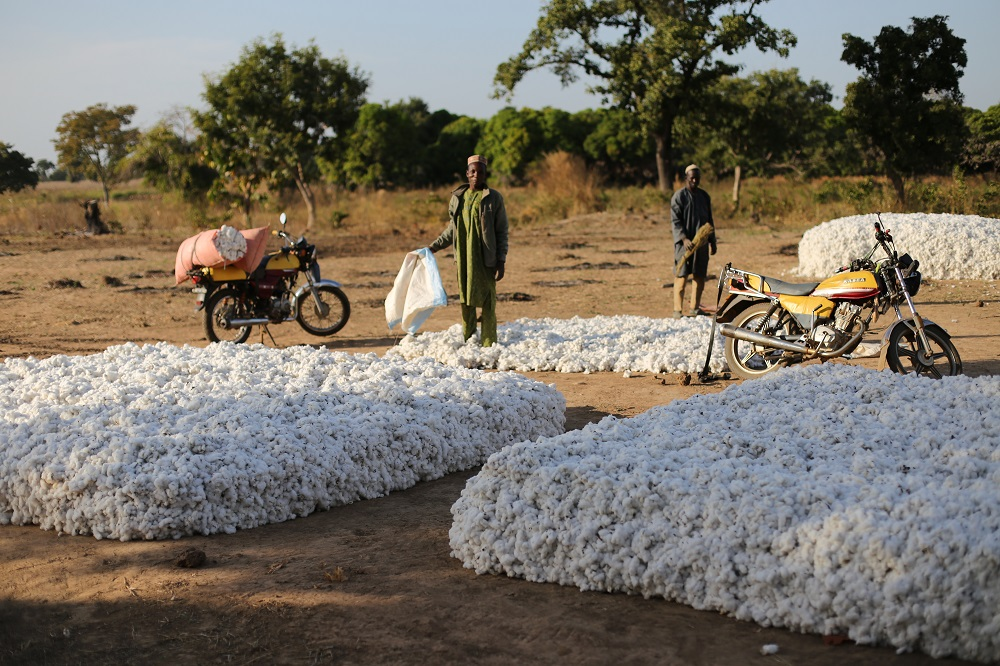 Textile Exchange says more countries in Africa are using genetically modified cotton, even as demand for organic and preferred cotton grows.