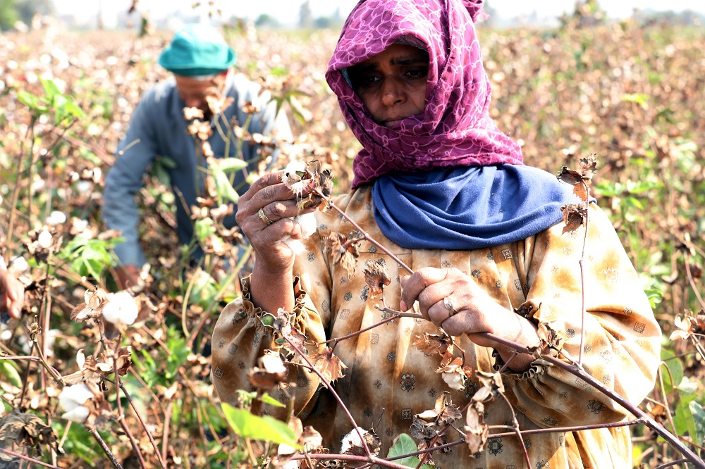 The Better Cotton Initiative, along with the United Nations Industrial Development Organization, has launched the BCI Program in Egypt.