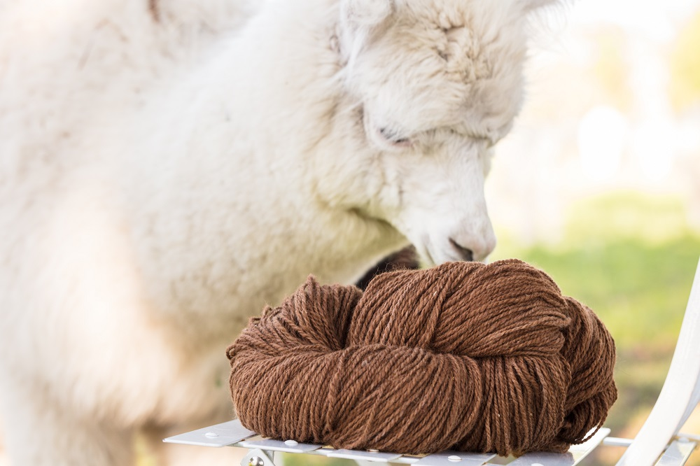 Textile Exchange has begun work on drafting a Responsible Alpaca Standard to ensure animals producing the fiber are treated humanely.
