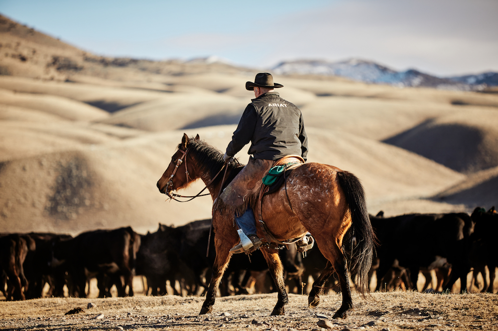 Around 80 percent of all Ariat leather comes from the same American ranchers that purchase the brand's work and Western boots.