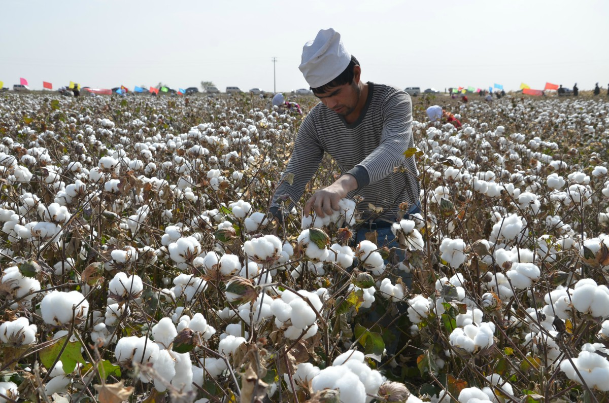 Human-rights groups have urged the U.S. Customs and Border Patrol to issue a regional WRO on all cotton-made goods from Xinjiang.