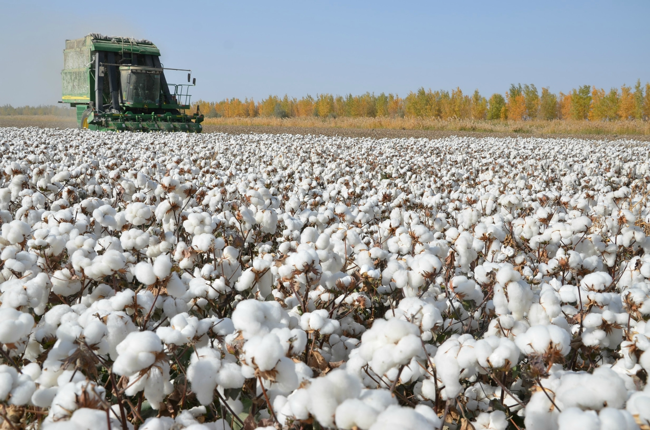 A potential U.S. Customs and Border Protection ban on Xinjiang cotton imports over reported force labor could threaten apparel sourcing.