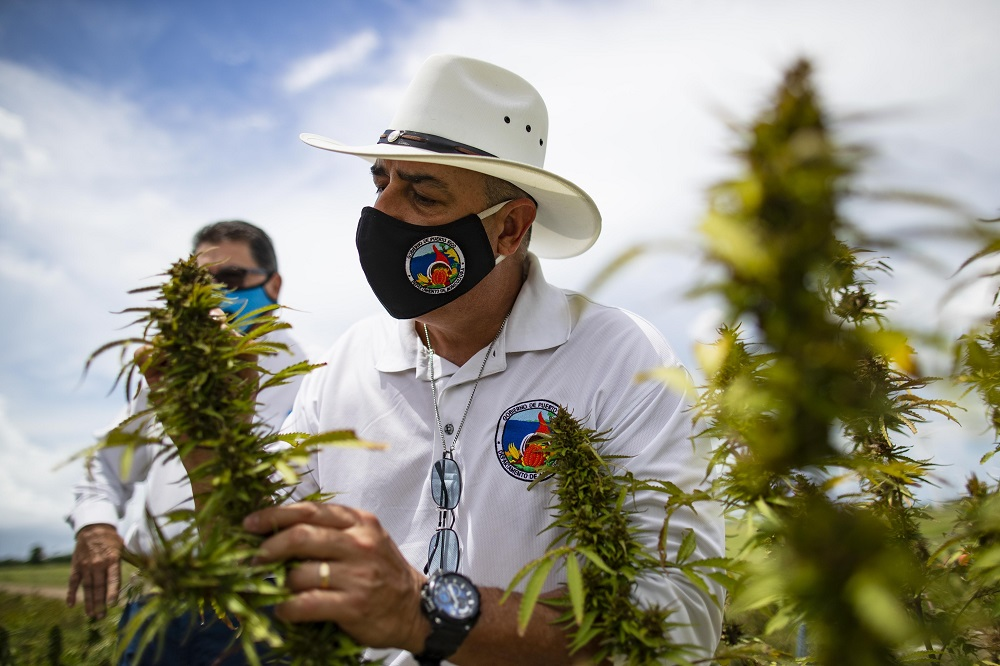 L.A.'s Hemp Traders launched of a line of hemp knit fabrics, making American-made hemp fabrics available to the textile and fashion sector.