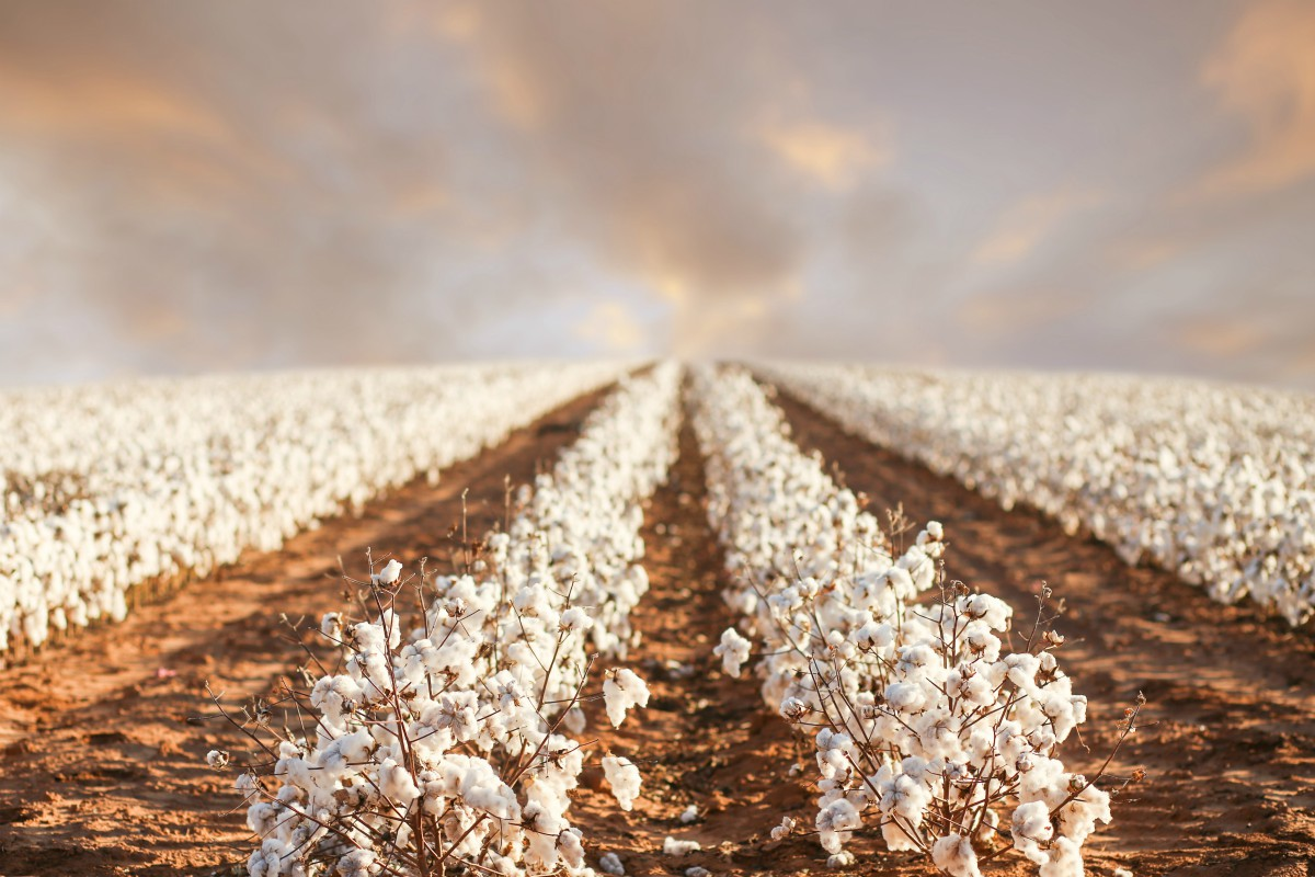 Cotton USA, which promotes U.S. cotton fibers and finished goods, is launching Cotton USA Solutions, a technical consultancy program.