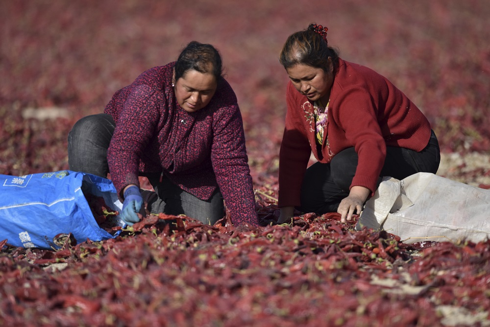 SuAllegations of forced labor and human rights abuses in China's cotton-rich Xinjiang region led BCI to cease field-level activities there.stained allegations of forced labor and human rights abuses in China's Xinjiang region led BCI to cease all field-level activities there.