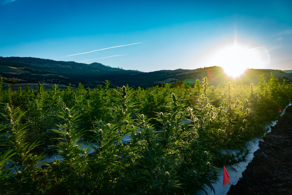 Panelists at Kingpins24 theorized why it's taken so long for hemp to catch on throughout the denim industry, and predict it's on its way.
