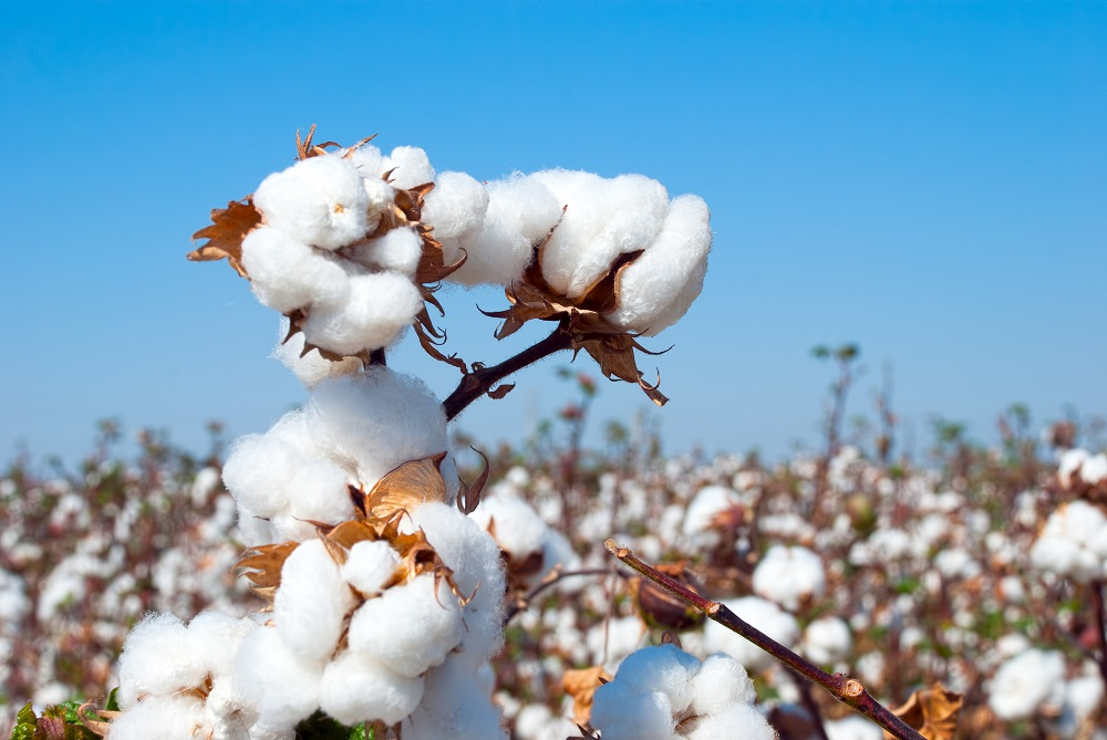 The U.S. Cotton Trust Protocol has been invited to join the Cotton 2040 coalition to scale up barriers to sustainable cotton uptake.