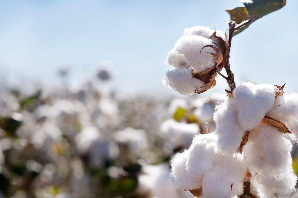 Ivory Coast, one of Africa's top cotton manufacturers, is looking to attract manufacturers