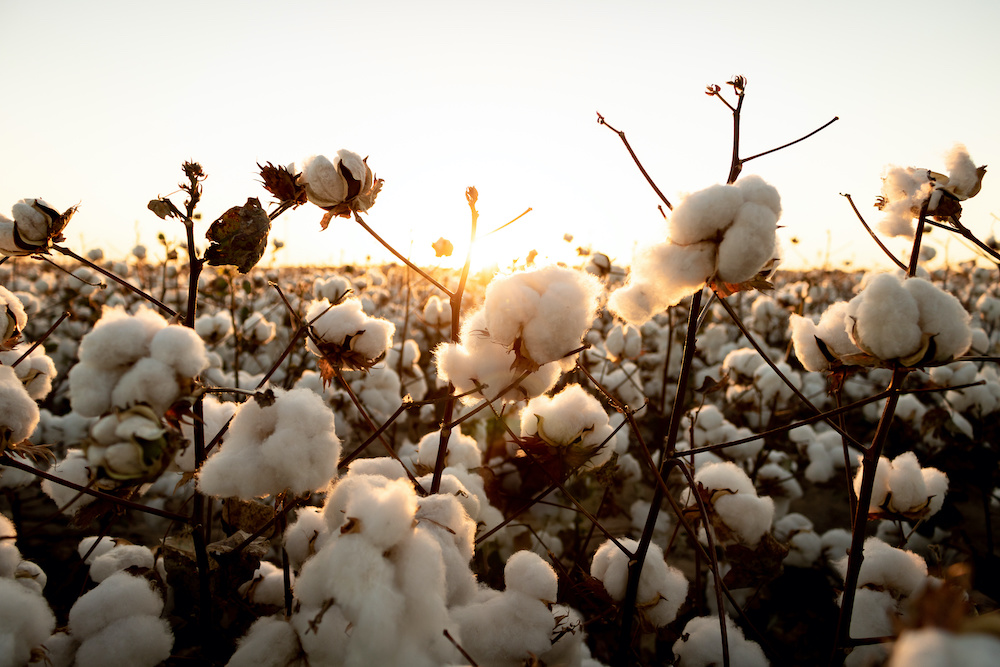 In a Transformers Foundation webinar, a panel of cotton experts discussed the nuances that many global average figures fail to address.