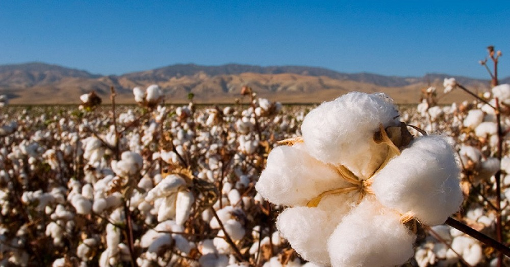 A U.S. Cotton Trust Protocol survey of U.K and U.S. brands and retailers found a sense of optimism for increased interest in sustainability.
