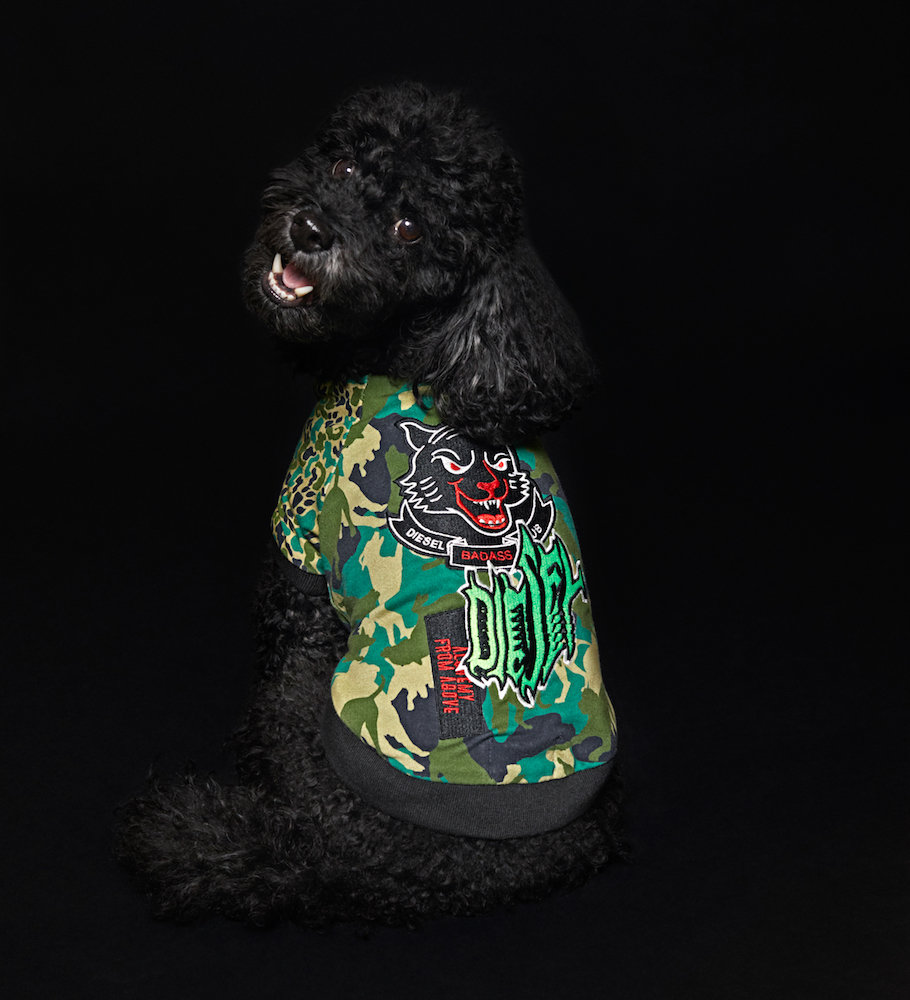 Diesel unveiled its first pet wear collection this week with a series of jackets and sweaters designed to fit toy and small-sized dogs.