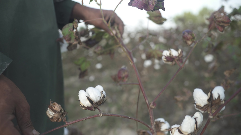 Artistic Milliners' brand partner Bestseller will join Milliner Cotton Organic initiative for organic cotton supply chain transparency.