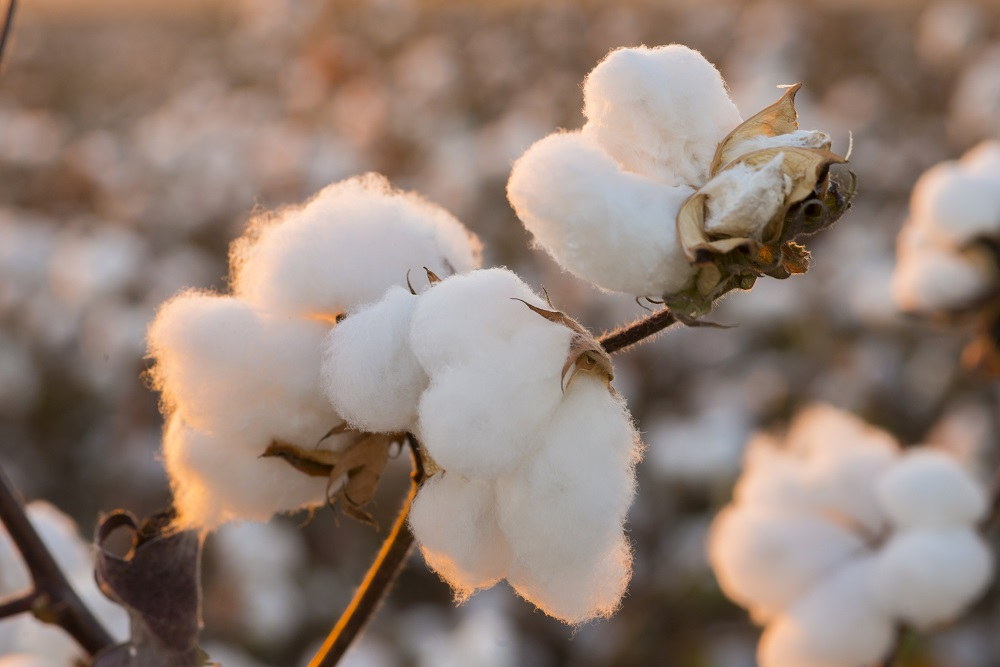 Eurofins Softlines + Leather and Eurofins GeneScan's Organic Cotton Identification Services earned organic cotton testing recognition.