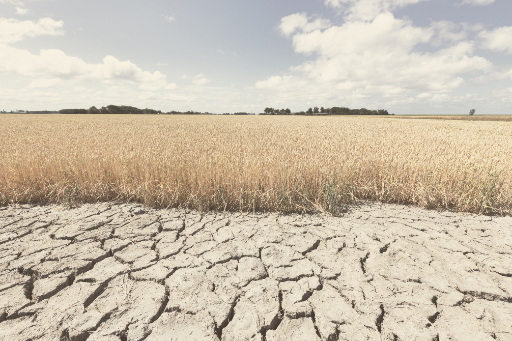 A megadrought's occurring across the US, impacting agriculture and ensuring a spike in food prices, leaving less money to spend on apparel.
