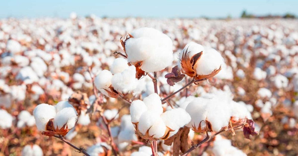 Dr. Gary Adams, president of the U.S. Cotton Trust Protocol, said the program is bringing verifiable goals for U.S. cotton production.
