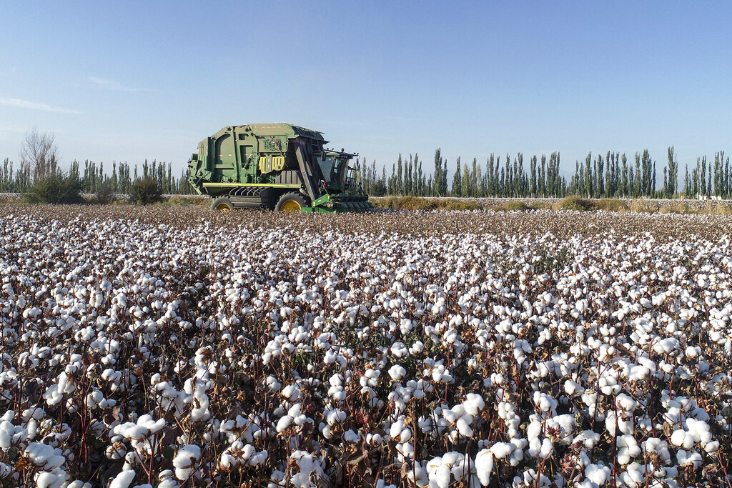 Human-rights groups have criticized the Better Cotton Initiative for scrubbing statements explaining why it exited Xinjiang.
