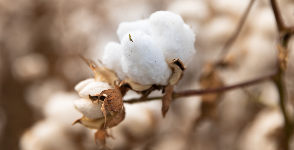 Through the mechanism of pre-season purchase, OCA participating brands pay significantly less for organic cotton than those buying ex-mill.