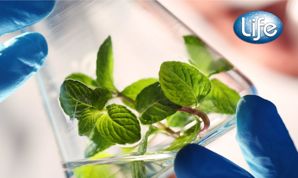 HeiQ has acquired Life, with a portfolio of smart ingredients and formulations, extending into the bio-based antimicrobial market.