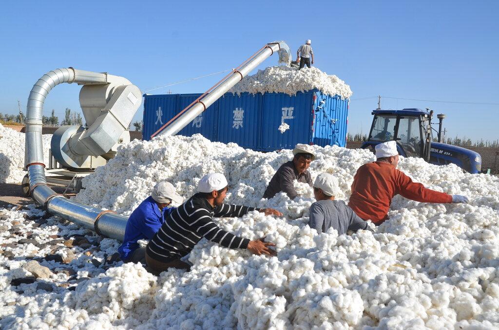 Xinjiang cotton at crossroads of China's new Silk Road