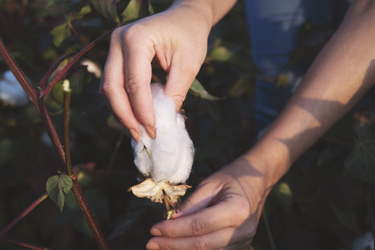 As the industry celebrates World Cotton Day, Sourcing Journal discusses the state of the industry with Cotton Inc.'s Kim Kitchings.